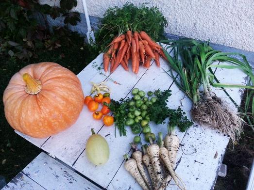 Pumpkin, carrots, peppers, beans, herbs, leeks, squash, parsnips.